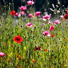 poppy field | palo alto, ca