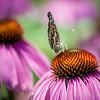 pollination station