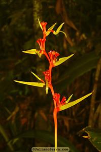 copyright (c) JulianoSerra.com, Monte Pascoal, Bahia