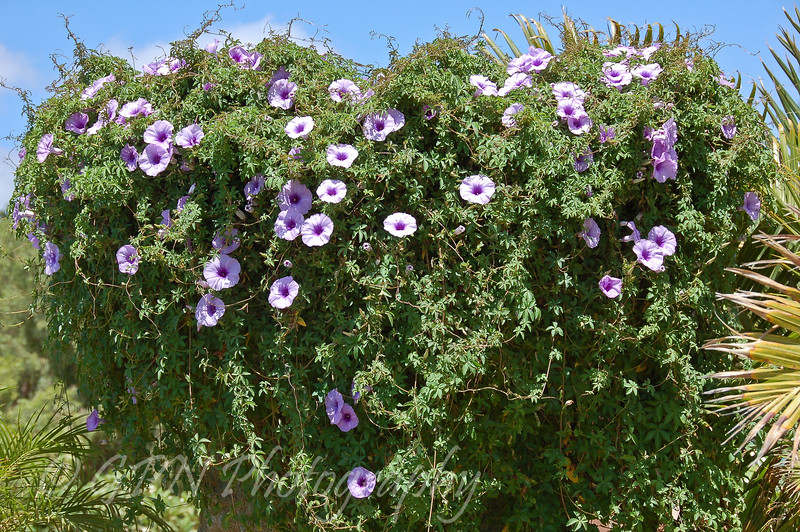 Taken at Rancho Texas Park, Lanzarote