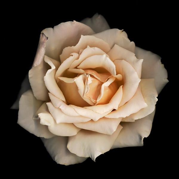 BT Flowers on Black II Nr.: 42-21778857