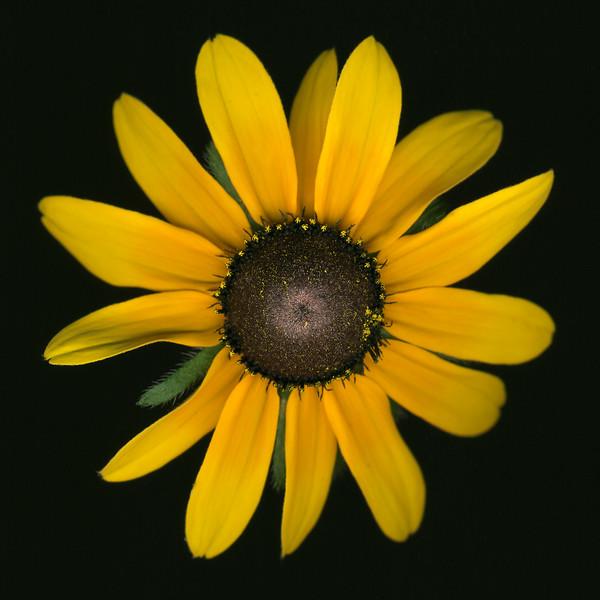 BT Flowers on Black II Nr.: 42-25536195
