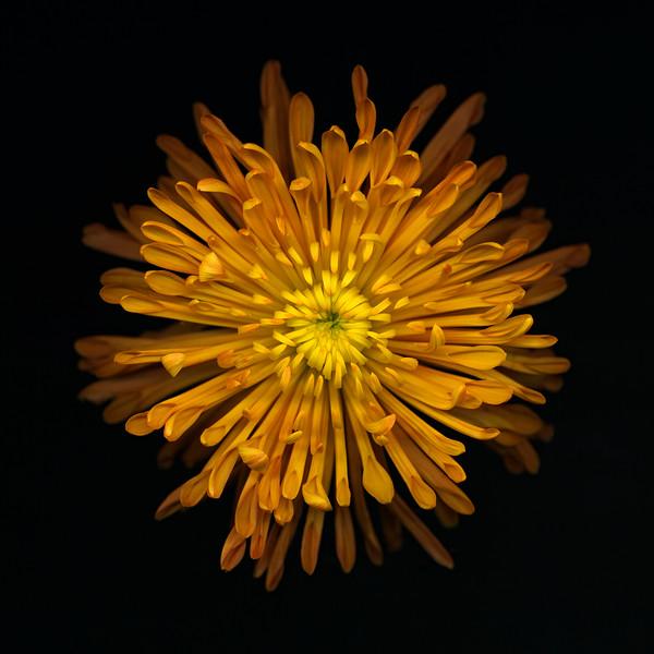 BT Flowers on Black II Nr.: 42-25536197