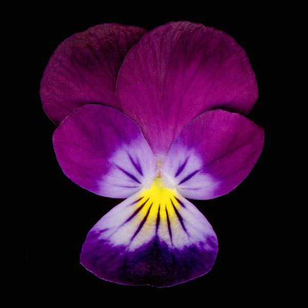 BT Flowers on Black II Nr.: 42-21778872