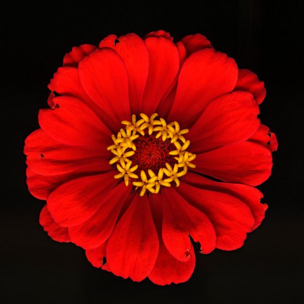 BT Flowers on Black II Nr.: 42-25536558