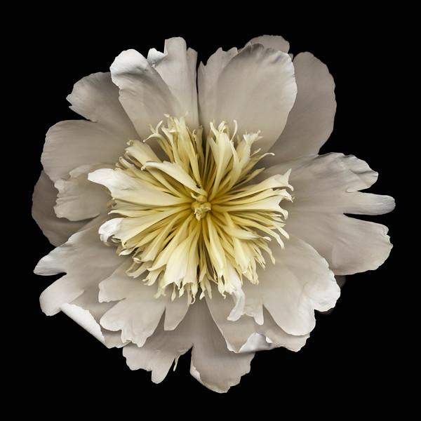 BT Flowers on Black II Nr.: 42-21778856