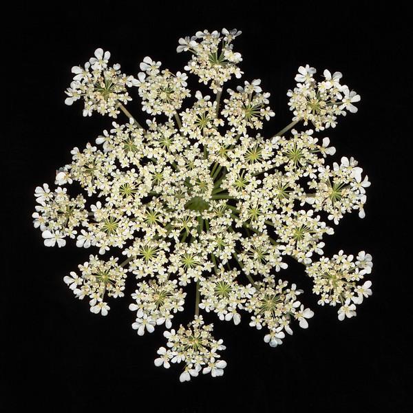 BT Flowers on Black II Nr.: 42-21778864