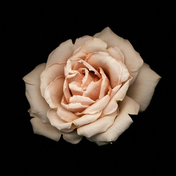 BT Flowers on Black II Nr.: 42-21778869