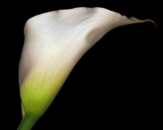 BT Flowers on Black II Nr.: 42-25536935