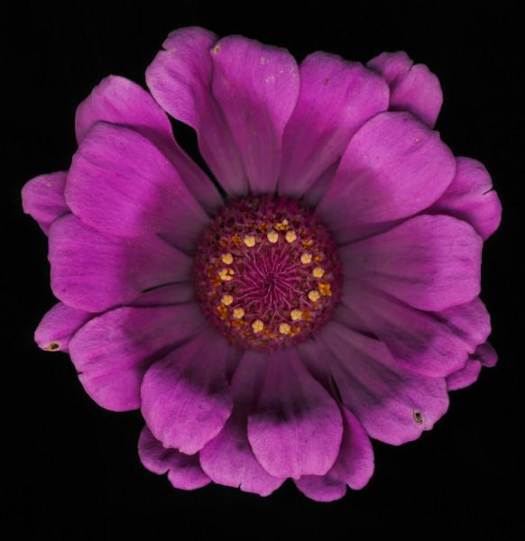 BT Flowers on Black II Nr.: 42-21778852