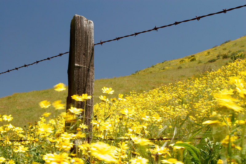 Post and Blowing Wildflowers, Carrizo Plains<br /> (California, 2006)