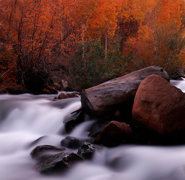 Bishop Creek and Fall Color, Eastern Sierra<br /> (California, 2005)