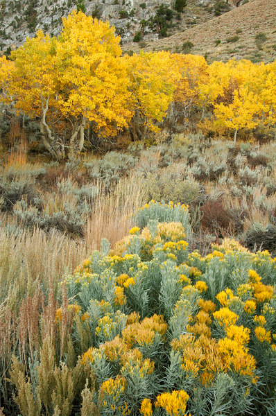 Fall Yellows, June Lake<br /> (California, 2005)