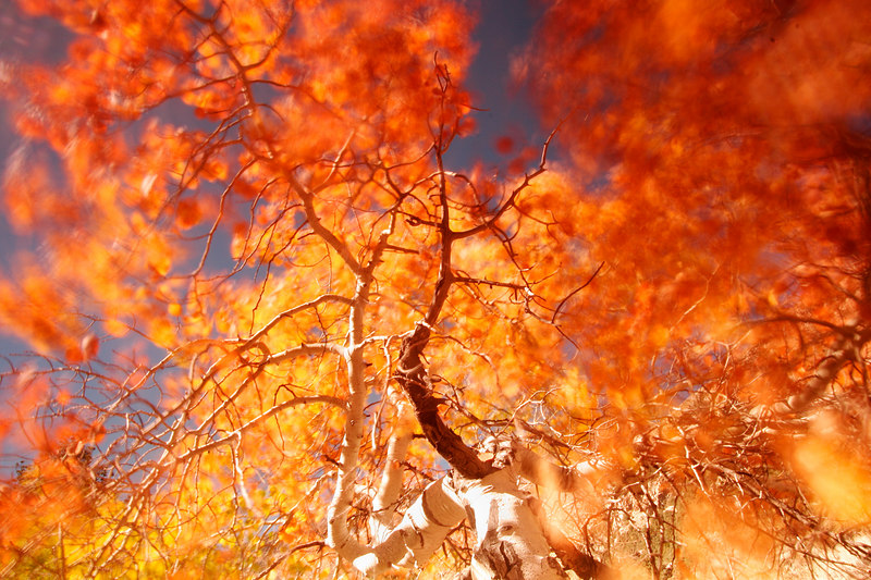 Blowing Leaves, Eastern Sierra<br /> (California, 2005)