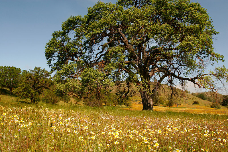 Spring Morning, Carrizo Plains<br /> (California, 2006)
