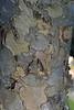 Tree bark taken in my garden