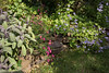 Personal Garden of Philip McClain of Designs on Nature