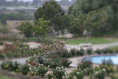 Rose Garden, Balboa Park, San Diego, May 2008