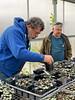 Jim D, John Bartlett, C. coum seedlings