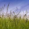 Gras-Schoenhof