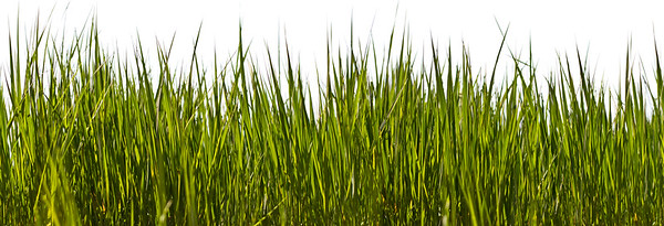 Gräser, Pflanzen, Grass, grasses, plants OG 9231 Pix XXL
