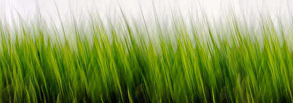 21600 x 7606 Gras; Gräser; Pflanzen; Wiesen; Natur; grün; gelb, Nobody; Frühling grass, green, yellow, nature, meadows, abstract, panorama, plants,