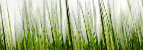 21600 x 7508  Gras; Gräser; Pflanzen; Wiesen; Natur; grün; gelb, Nobody; Frühling grass, green, yellow, nature, meadows, abstract, panorama, plants,