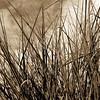 Gräser, Pflanzen, Grass, grasses, plants XXL bis 10 m