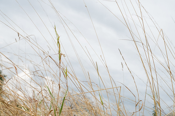 BT Gras & Wiese