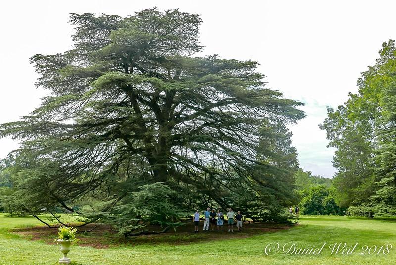 Under cedar from L: Steve, Mike C, Linette, Noel, David, Mike W