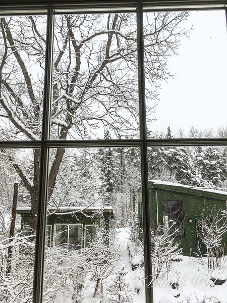 The aviary and greenhouse in the snow
