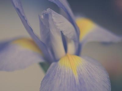 Iris: A Photo Study | 2010