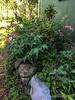 Greenhouse raised bed