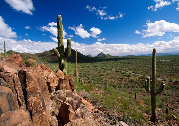 BT Kaktus No.  42-44292716