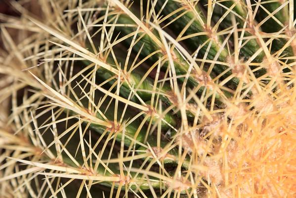 BT Kaktus No.  Rights Managed