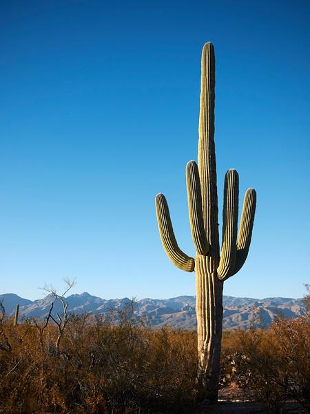 BT Kaktus No.  42-46894557