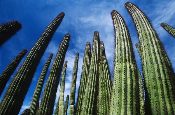 BT Kaktus No.  42-19438938