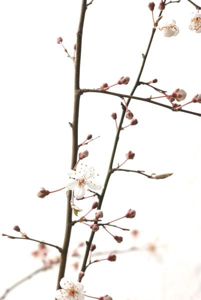 BT Blüte Nr.