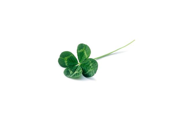 Trifolium, Clover, Four leaf.