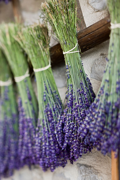 Bunches of lavander hanging to dry