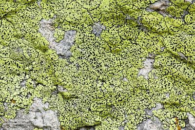 Map lichen, Rhizocarpon geographicum, Valgrisenche, Italian Alps.  Also widespread in Europe, including the UK