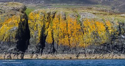 Lichen zonation showing oil-tar lichen, Verrucaria maura (black zone), Caloplaca sp. and Xanthoria sp. (yellow zone) Mull, Scotland