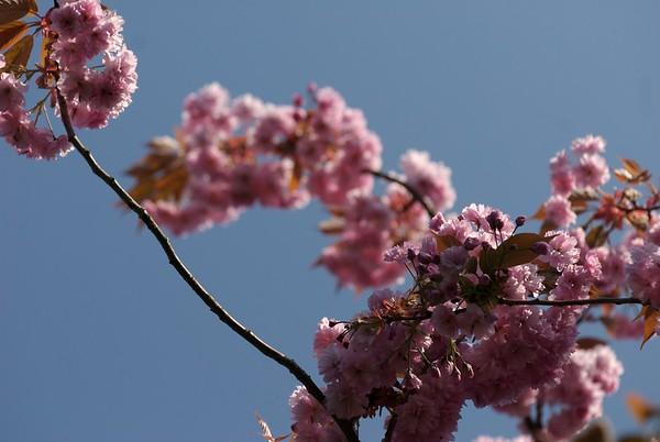 BT Magnolia Nr.  _DSC0061 1
