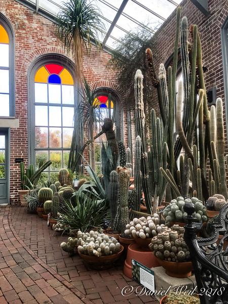 Cacti/succulents, Linnaeus building, MOBOT