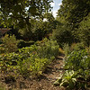 Moestuin - our vegetable garden