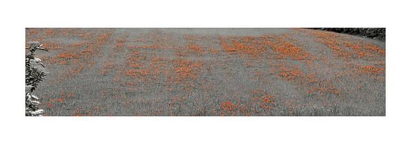 Individuelle Fototapeten von Berlintapete Fototapeten selbst gestalten  und individuell bedrucken  In Wunschgröße und auf Vliestapete,
