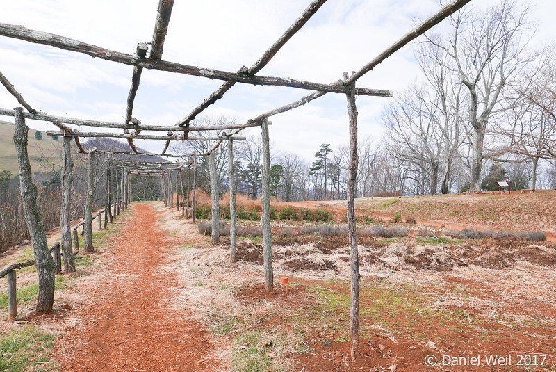 Arbor that holds scarlet runner beans and hyacinth beans in season