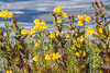 The yellow flower is horned bladderwort, the red one in front is bog saint John's wort.