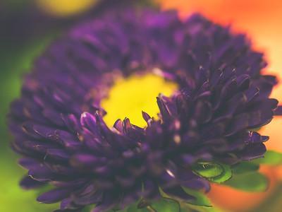 Birthday Flowers   2010