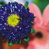 Birthday Flowers | 2010